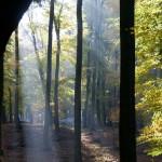 Exkursion Lainzer Tiergarten